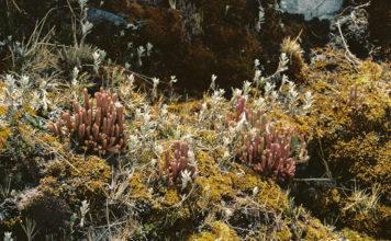 Imatge de l'exposició La respuesta de la tierra de Luisa Ordoñez